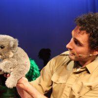 Koala looking away